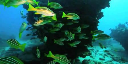 Reserva Marina  del Archipiélago Chinijo